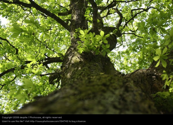 Baum_Photocase